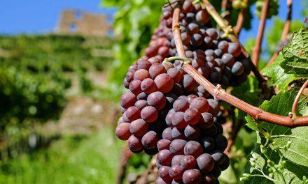 Un avocat spécialisé dans le domaine viticole se trouve à Bordeaux